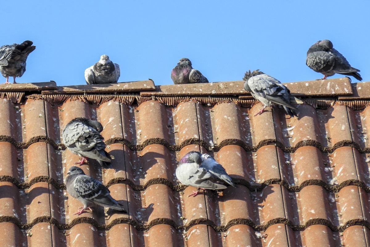 enlever nid oiseau